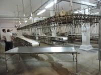 Frangos Piovesan projeta ampliar o abate de animais até o mês de março